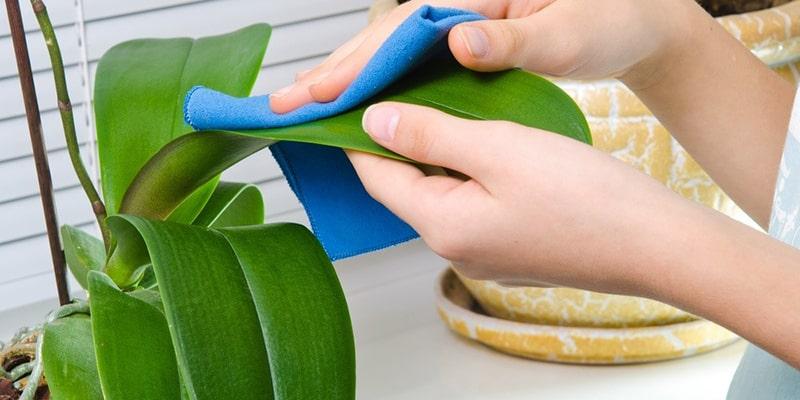 تمیز کردن گل مصنوعی با استفاده از دستمال نمدار
